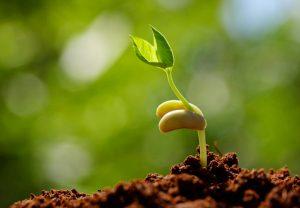 Growth seedling